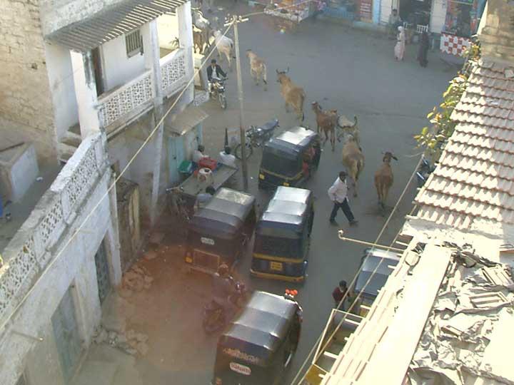 Dwarka-Street-Cows