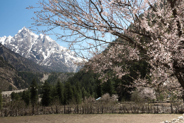 Preparing for the 3rd Himalayan XC Marathon