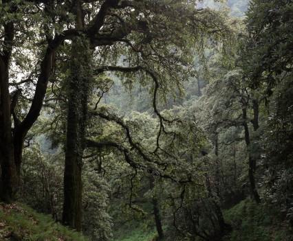 Martin Holland - 30th Birthday Summer Solstice Microadventure - Forest around Billing Hill
